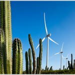 Wind Turbines and Cactus, Aruba