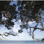 Goat Island, North Island, New Zealand