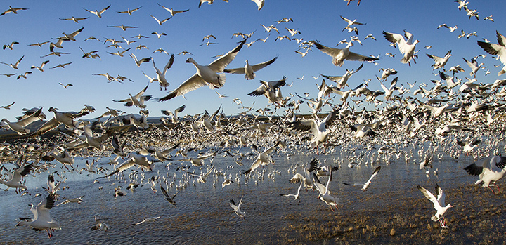 Bosque Del Apache Nwr New Mexico Paul Souders Worldfoto Blog